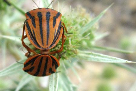 Dos insectes en plena adaptació